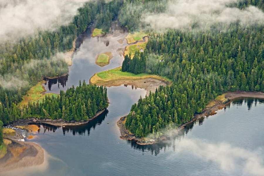 Alaska - Rain Forest