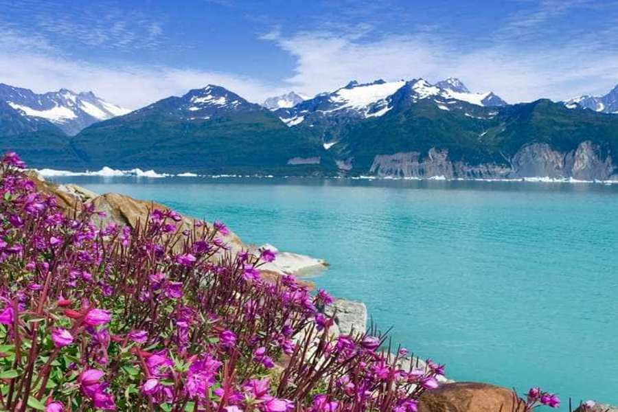 Glacier bay flowers