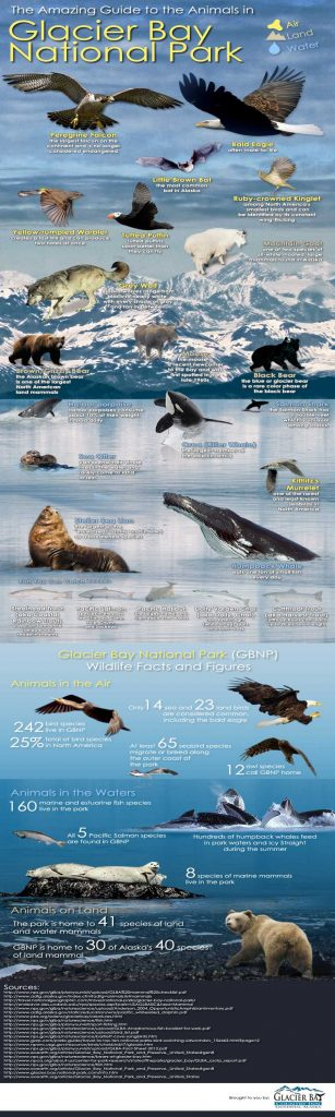 Glacier Bay - Animals - Infographic